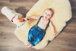 Jack russels et les bébés