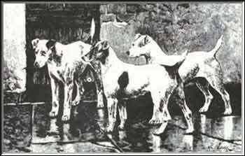 Origine du jack russell