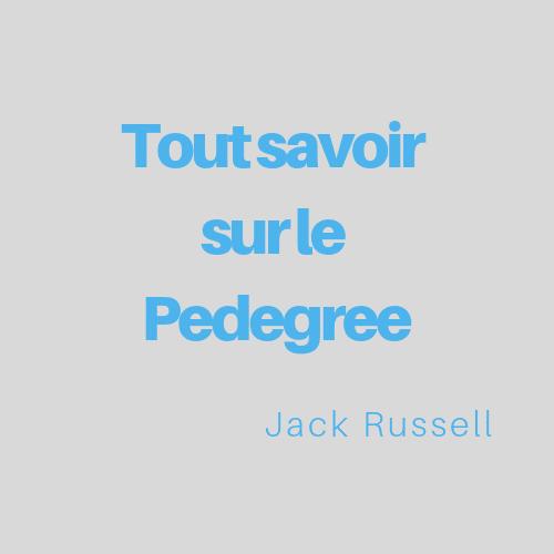 Tout savoir sur le Pedigree Jack Russell