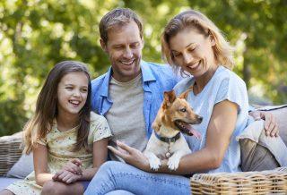 Comment se faire respecter par ton chien ?
