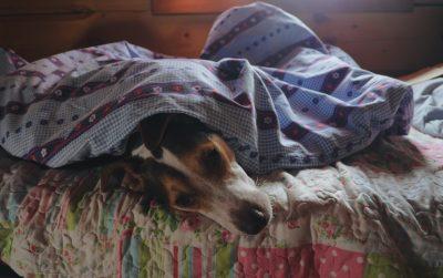 Peut on laisser dormir un chien dans son lit ?
