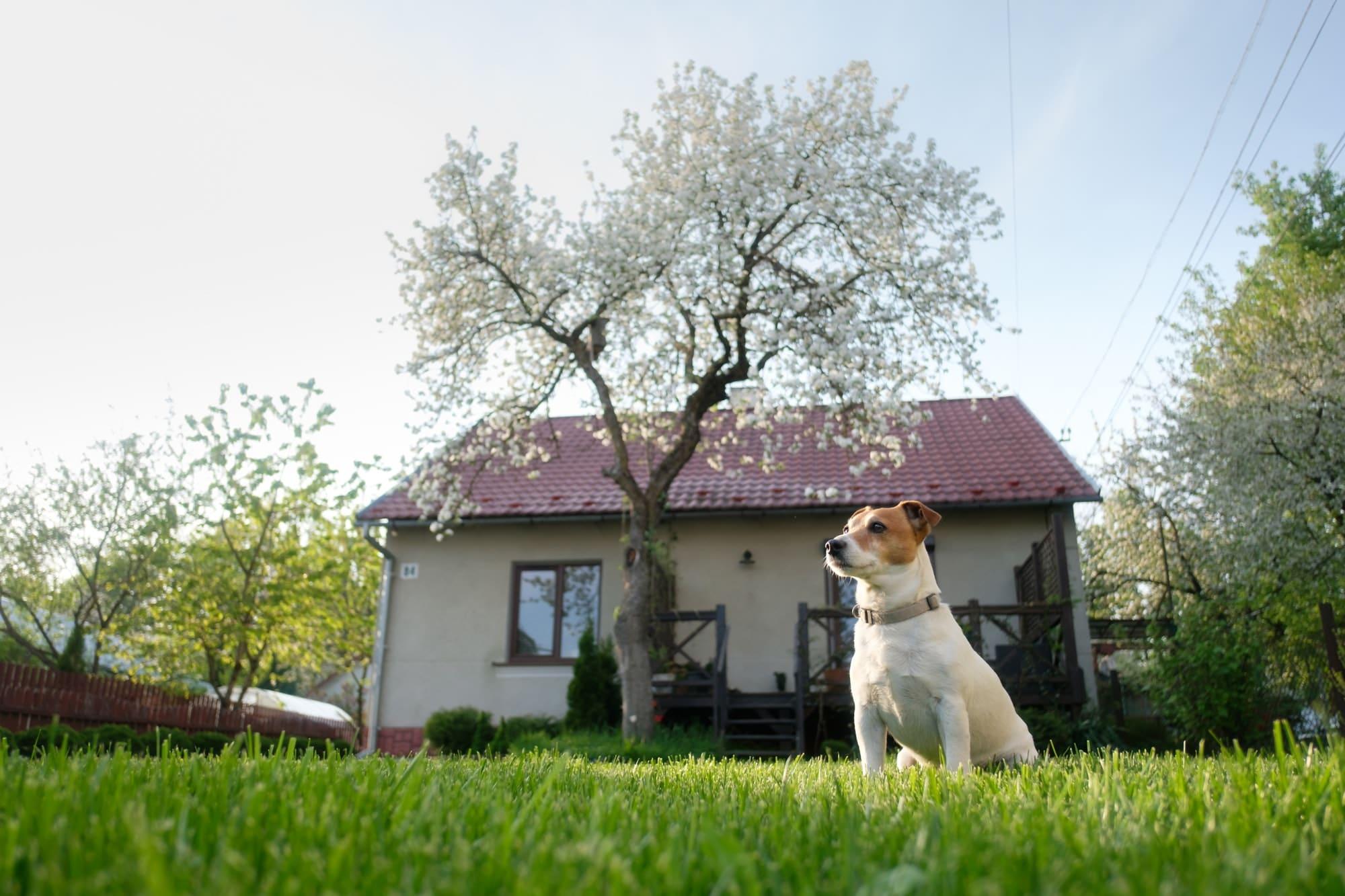 Laisser seul son chien à la maison