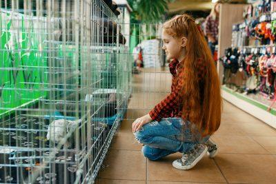 Utilité d'une cage pour un chien