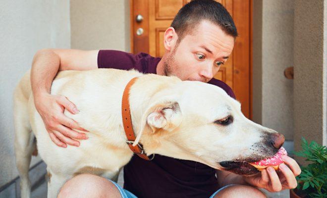Aliments à ne pas donner à son chien