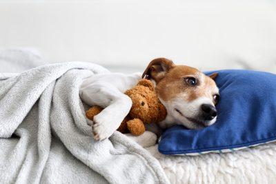 Se préparer pour bien accueillir son chien