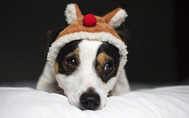 votrejackestilenbonnesant bonne chien