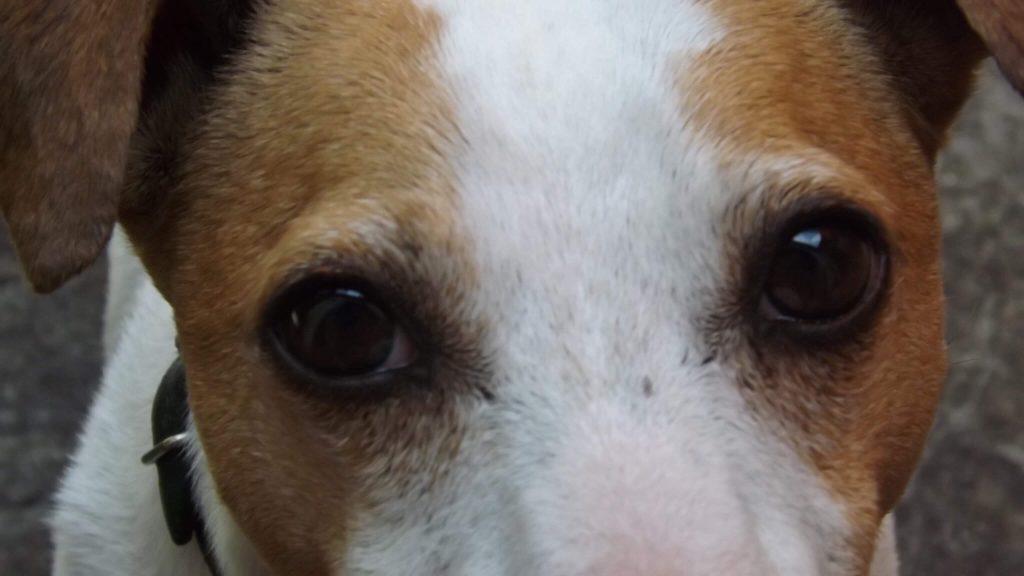 Comparer assurance chien
