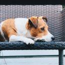 Regurgitation et vomissement chez les chiens : quels sont les causes ?