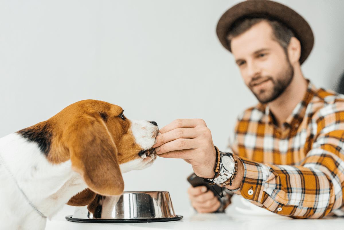 Pourquoi est-ce important de prêter une attention à l'alimentation de votre chien?